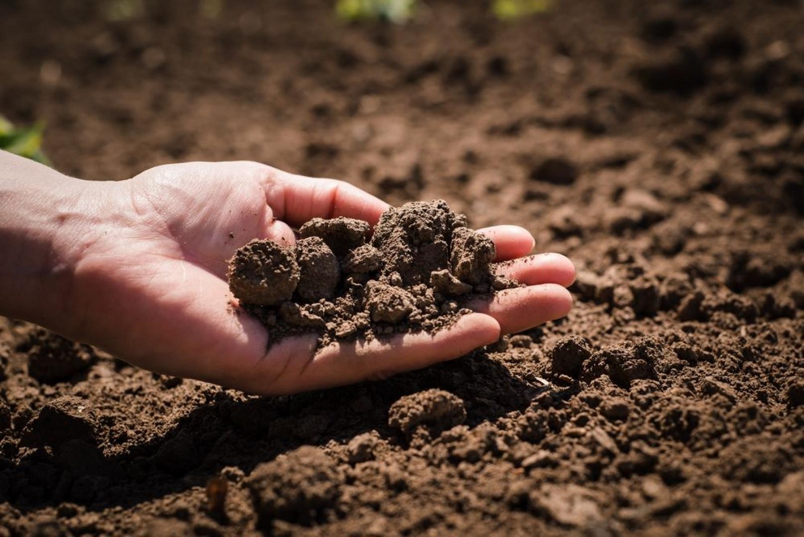 Effecten van organische reststoffen op bodemgezondheid en -vruchtbaarheid